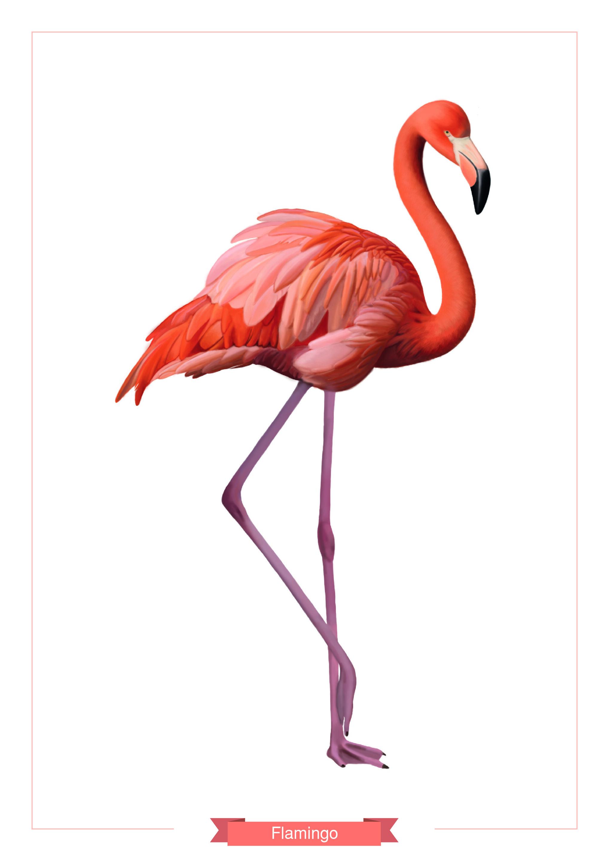 Flamingo illüstrasyon-01